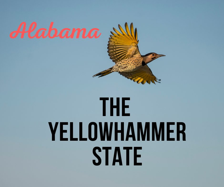 Alabama Yellowhammer bird
